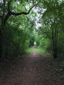 Ice Age Trail, Central Wisconsin